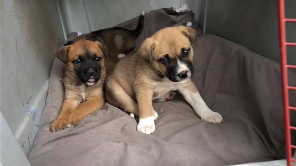 Dogs for Adoption – Pound Rescue